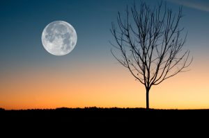 Mesečeva dijeta  – 3 kilograma manje za 24 časa!