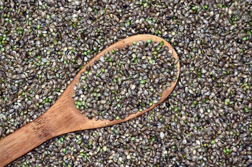 Seme konoplje kao dar prirode